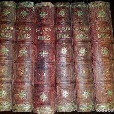Libros antiguos: LA VIDA DE LOS ANIMALES - A.E.BREHM - 6 TOMOS. Lote 195679333