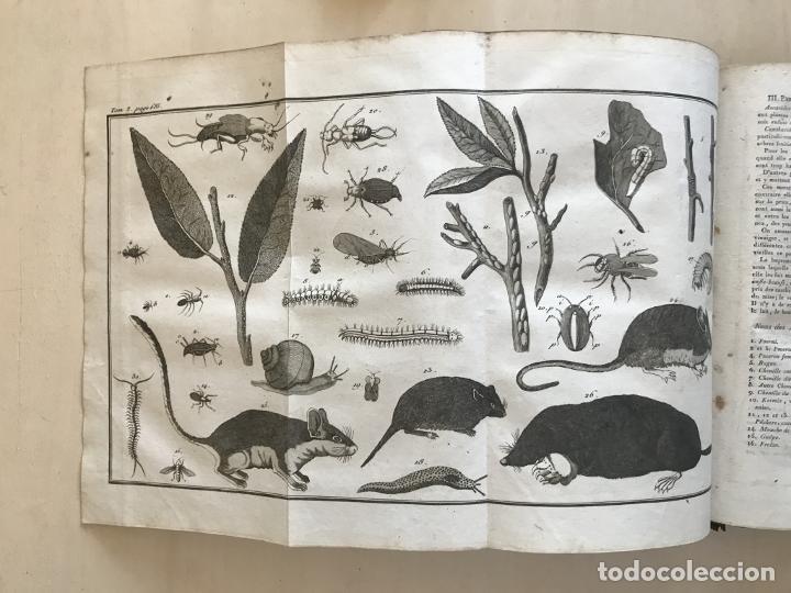 Libros antiguos: LA NOUVELLE MAISON RUSTIQUE ..Tomo II, 1798. J-F- Bastien. Posee 18 grabados. - Foto 19 - 198405088