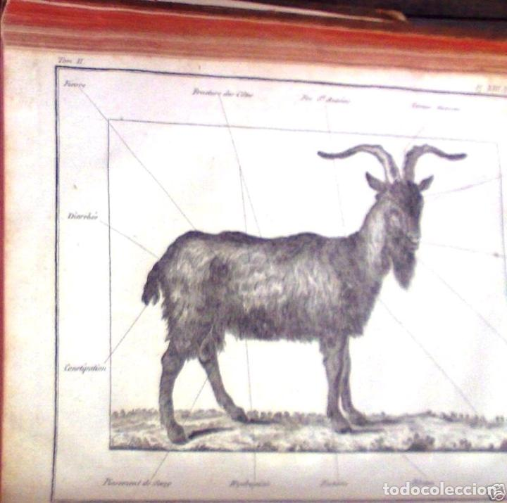 Libros antiguos: COURS COMPLET DAGRICULTURE...Tomo II, 1785. F. Rozier. Posee 27 grabados - Foto 2 - 198412122