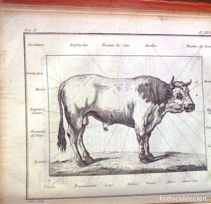 Libros antiguos: COURS COMPLET DAGRICULTURE...Tomo II, 1785. F. Rozier. Posee 27 grabados - Foto 3 - 198412122