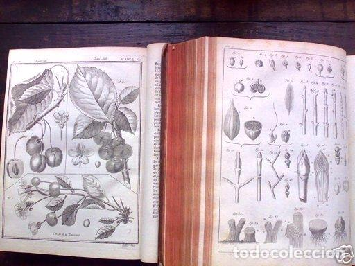 Libros antiguos: COURS COMPLET DAGRICULTURE...Tomo II, 1785. F. Rozier. Posee 27 grabados - Foto 4 - 198412122