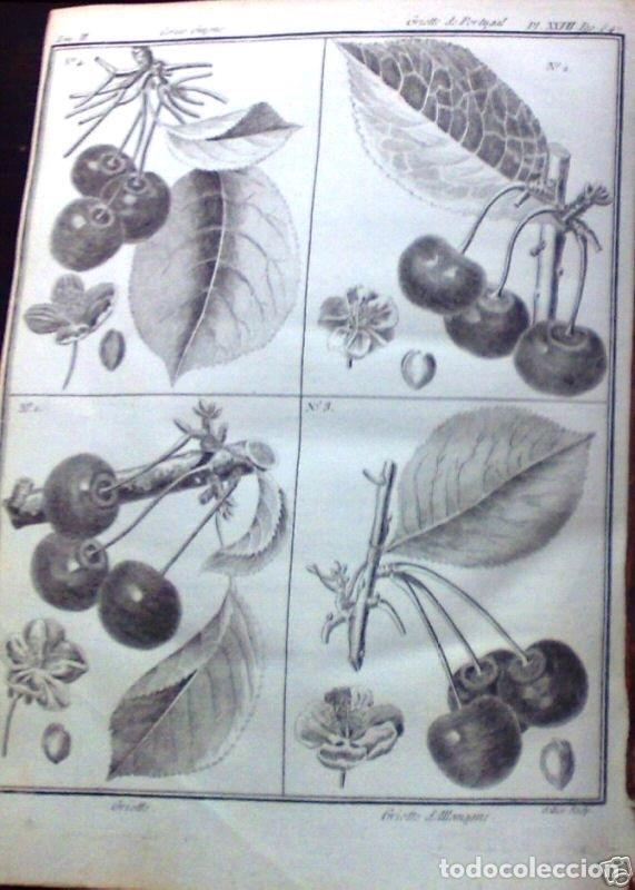 Libros antiguos: COURS COMPLET DAGRICULTURE...Tomo II, 1785. F. Rozier. Posee 27 grabados - Foto 5 - 198412122