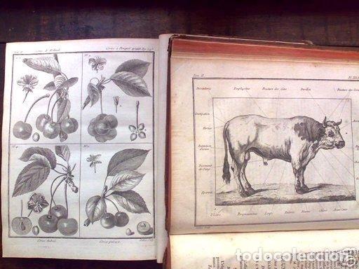 Libros antiguos: COURS COMPLET DAGRICULTURE...Tomo II, 1785. F. Rozier. Posee 27 grabados - Foto 6 - 198412122