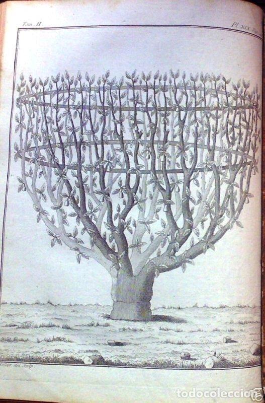 Libros antiguos: COURS COMPLET DAGRICULTURE...Tomo II, 1785. F. Rozier. Posee 27 grabados - Foto 7 - 198412122