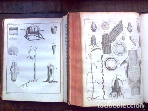 Libros antiguos: COURS COMPLET DAGRICULTURE...Tomo II, 1785. F. Rozier. Posee 27 grabados - Foto 10 - 198412122