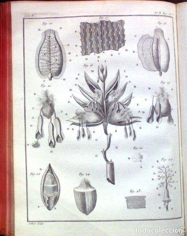 Libros antiguos: COURS COMPLET DAGRICULTURE...Tomo II, 1785. F. Rozier. Posee 27 grabados - Foto 12 - 198412122