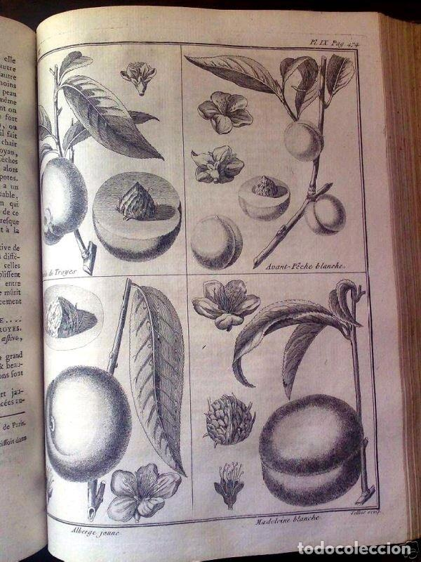 Libros antiguos: COURS COMPLET D AGRICULTURE....tomo 7. F. Rozier. Posee 22 grabados - Foto 2 - 198413086