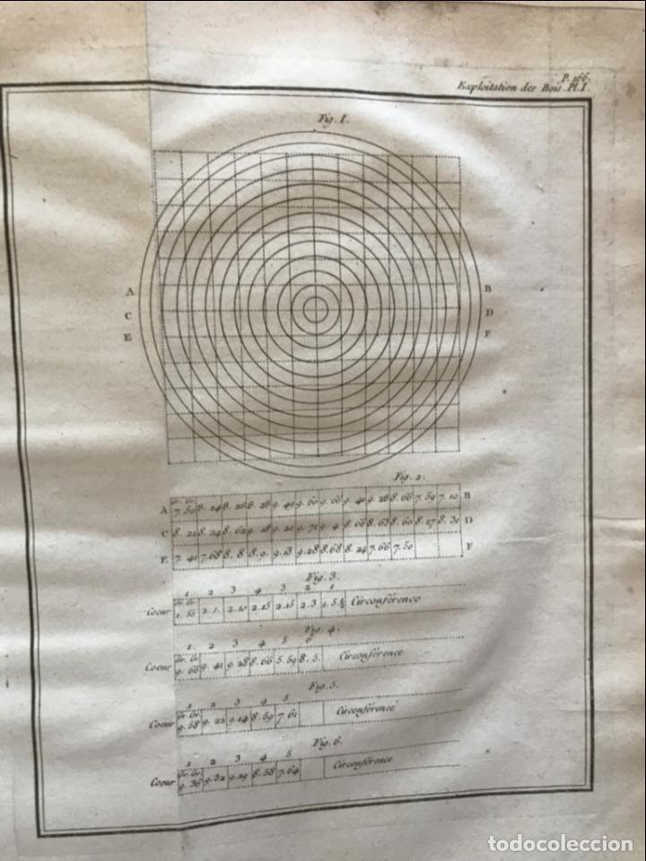 Libros antiguos: De l exploitation des bois, ou moyens..., Tomo I y II , 1764. Duhamel du Monceau. Posee 36 grabados - Foto 18 - 198416221