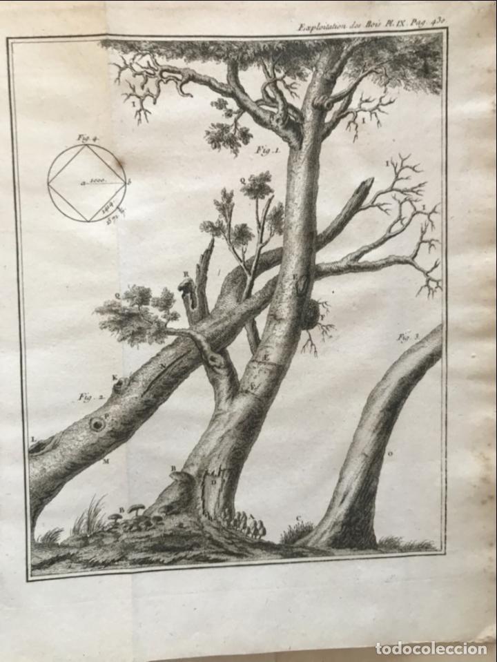 Libros antiguos: De l exploitation des bois, ou moyens..., Tomo I y II , 1764. Duhamel du Monceau. Posee 36 grabados - Foto 29 - 198416221