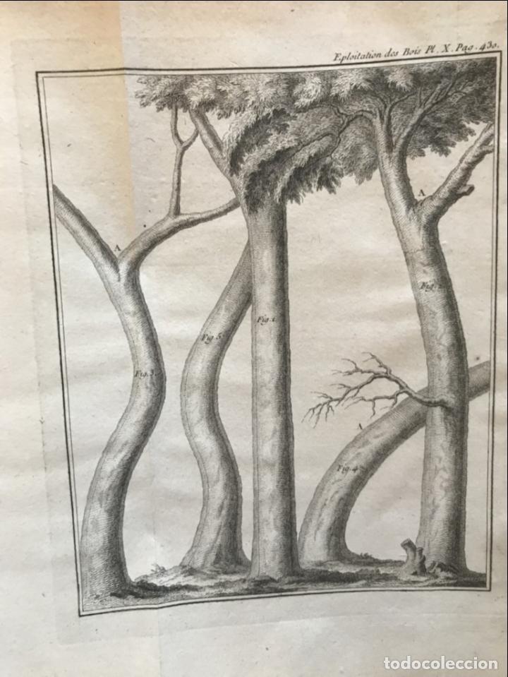Libros antiguos: De l exploitation des bois, ou moyens..., Tomo I y II , 1764. Duhamel du Monceau. Posee 36 grabados - Foto 30 - 198416221