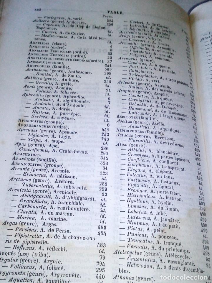 Libros antiguos: ~~~~ HISTOIRE NATURELLE DES CRUSTACÉS, DES ARACNIDES ET DES MYRIAPODES PAR M. LUCAS ~~~~ - Foto 5 - 199524517