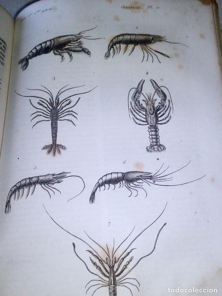 Libros antiguos: ~~~~ HISTOIRE NATURELLE DES CRUSTACÉS, DES ARACNIDES ET DES MYRIAPODES PAR M. LUCAS ~~~~ - Foto 8 - 199524517