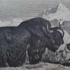 Libros antiguos: 8 GRABADOS DE 1880 DE ANIMALES: ELEFANTES, JIRAFAS, PUERCO ESPÍN, CANGURO, RINOCERONTE.... Lote 201311785