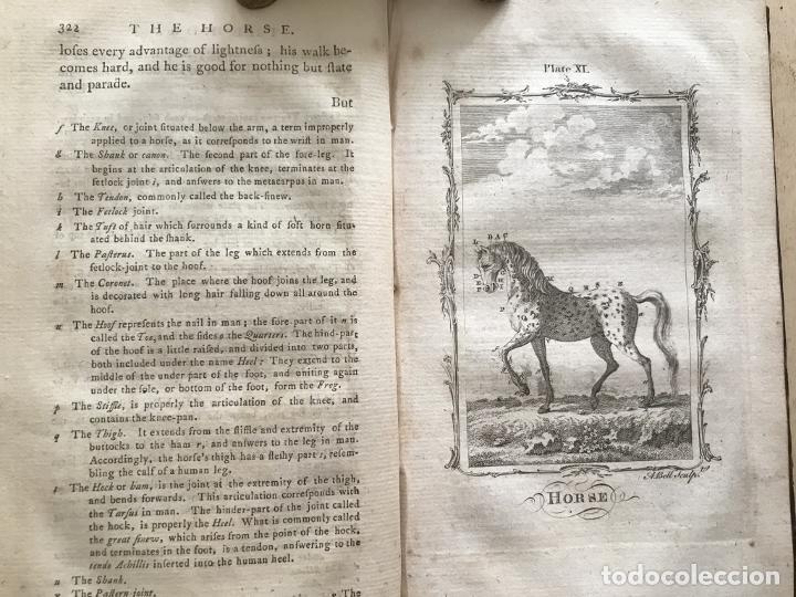 Libros antiguos: NATURAL HISTORY GENERAL..., 7 tomos, 1985 y 1991. BUFFON/WILLIAM SMELLIE. 291 grabados - Foto 12 - 202015646
