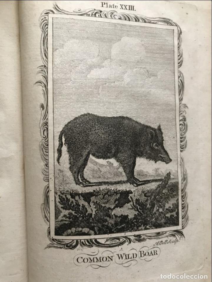 Libros antiguos: NATURAL HISTORY GENERAL..., 7 tomos, 1985 y 1991. BUFFON/WILLIAM SMELLIE. 291 grabados - Foto 25 - 202015646