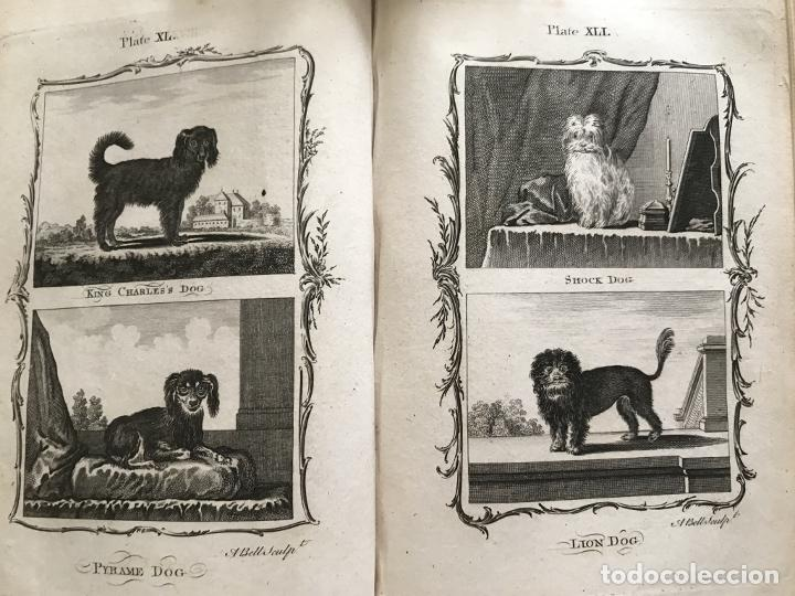 Libros antiguos: NATURAL HISTORY GENERAL..., 7 tomos, 1985 y 1991. BUFFON/WILLIAM SMELLIE. 291 grabados - Foto 32 - 202015646