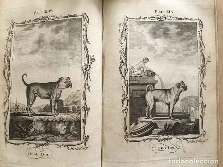 Libros antiguos: NATURAL HISTORY GENERAL..., 7 tomos, 1985 y 1991. BUFFON/WILLIAM SMELLIE. 291 grabados - Foto 33 - 202015646