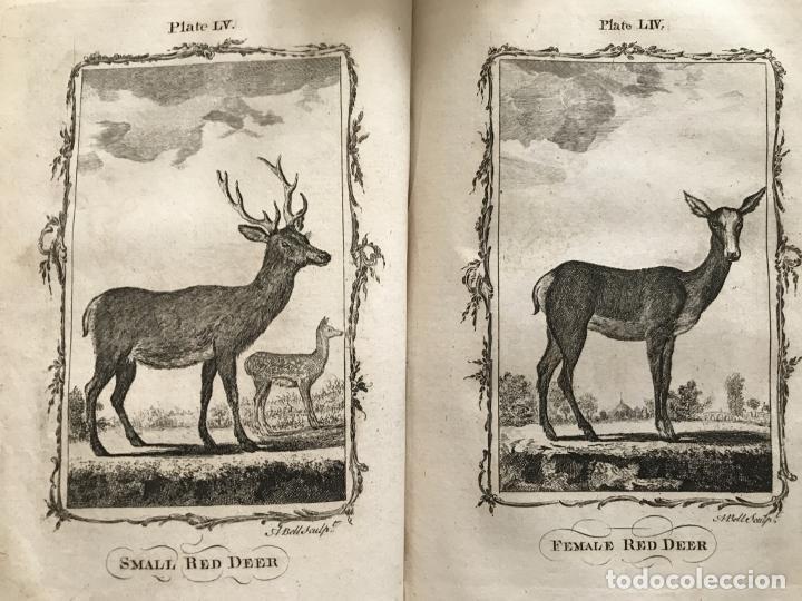 Libros antiguos: NATURAL HISTORY GENERAL..., 7 tomos, 1985 y 1991. BUFFON/WILLIAM SMELLIE. 291 grabados - Foto 38 - 202015646