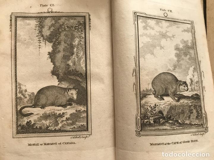 Libros antiguos: NATURAL HISTORY GENERAL..., 7 tomos, 1985 y 1991. BUFFON/WILLIAM SMELLIE. 291 grabados - Foto 47 - 202015646