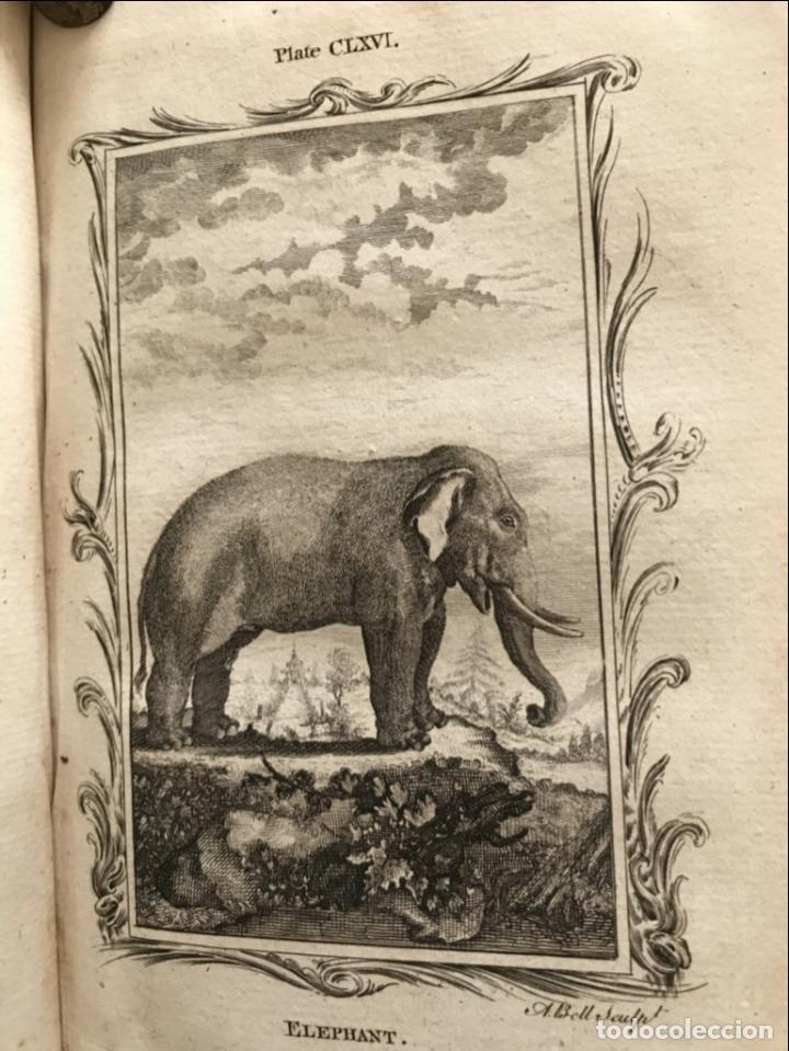 Libros antiguos: NATURAL HISTORY GENERAL..., 7 tomos, 1985 y 1991. BUFFON/WILLIAM SMELLIE. 291 grabados - Foto 56 - 202015646
