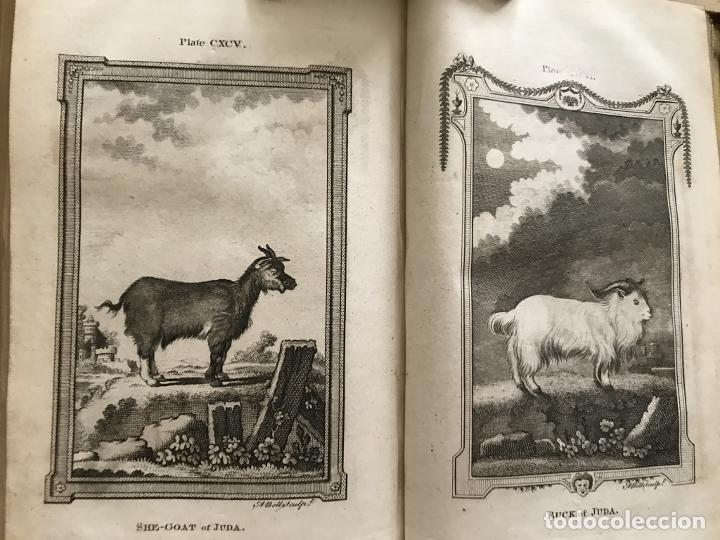 Libros antiguos: NATURAL HISTORY GENERAL..., 7 tomos, 1985 y 1991. BUFFON/WILLIAM SMELLIE. 291 grabados - Foto 61 - 202015646