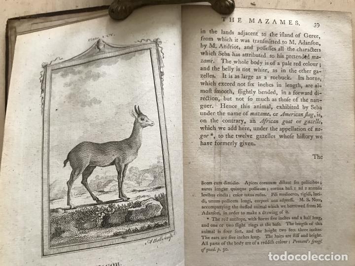 Libros antiguos: NATURAL HISTORY GENERAL..., 7 tomos, 1985 y 1991. BUFFON/WILLIAM SMELLIE. 291 grabados - Foto 63 - 202015646