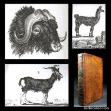 Libros antiguos: AÑO 1787 HISTORIA NATURAL DE BUFFON 14 GRABADOS BISONTE LLAMA ÑU ANTÍLOPES ZOOLOGÍA ANIMALES T10. Lote 203796885