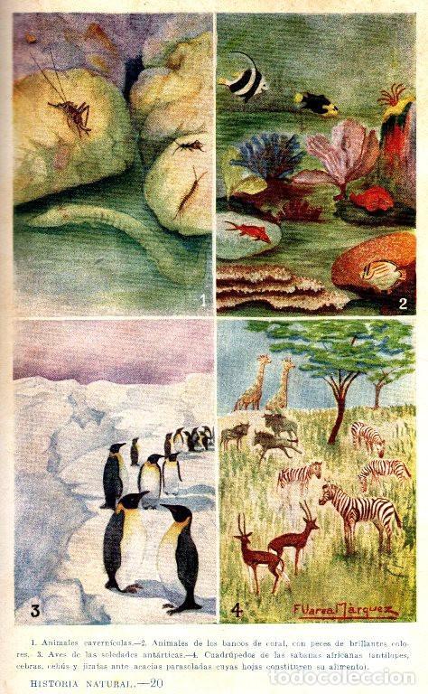 Libros antiguos: AÑO 1935 - BIBLIOTECA HISPANIA. HISTORIA NATURAL. CELSO AREVALO. ED. SOPENA. - Foto 4 - 207404705