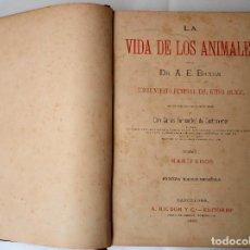 Libros antiguos: LA VIDA DE LOS ANIMALES 1880 TOMO I LOS MAMIFEROS. Lote 207698953