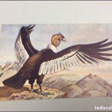 Libros antiguos: COLECCIÓN ÁNGEL CABRERA 59 FICHAS 14X9CM. Lote 213774628