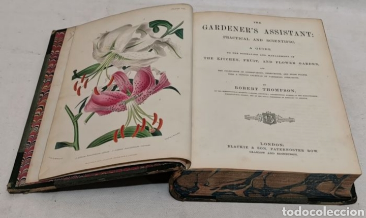 ROBERT THOMPSON. THE GARDENERS ASSISTANT. PRACTICAL AND SCIENTIFIC. 1857. EL ASISTENTE DEL JARDINERO (Libros Antiguos, Raros y Curiosos - Ciencias, Manuales y Oficios - Biología y Botánica)