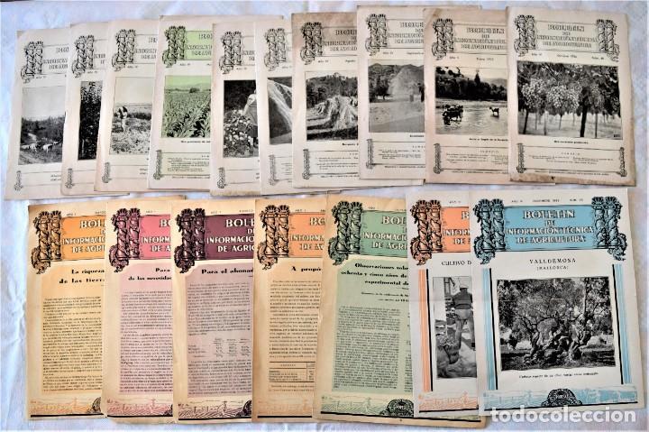 LOTE 17 EJEMPLARES BOLETÍN DE INFORMACIÓN TÉCNICA DE AGRICULTURA AÑOS 1931, 1933, 1934 Y 1935 TABACO (Libros Antiguos, Raros y Curiosos - Ciencias, Manuales y Oficios - Bilogía y Botánica)