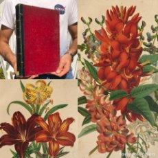Libros antiguos: 1883 - HISTORIA NATURAL - BOTANICA - GRABADOS DE FLORES - LIBRO ILUSTRADO. Lote 222324247