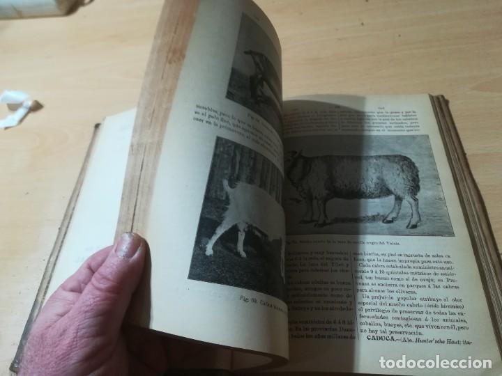 Libros antiguos: DICCIONARIO DE VETERINARIA, CAGNY - GOBERT / TOMO PRIMERO / ED FELIPE GONZALEZ ROJAS / Q306 - Foto 10 - 225052506