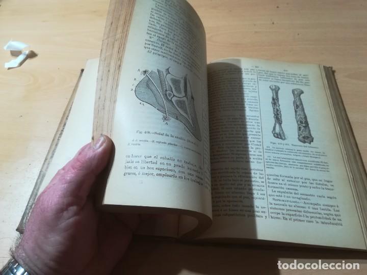 Libros antiguos: DICCIONARIO DE VETERINARIA, CAGNY - GOBERT / TOMO TERCERO / ED FELIPE GONZALEZ ROJAS / Q306 - Foto 12 - 225052605