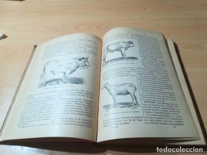 Libros antiguos: DICCIONARIO DE VETERINARIA, CAGNY - GOBERT / TOMO TERCERO / ED FELIPE GONZALEZ ROJAS / Q306 - Foto 15 - 225052605