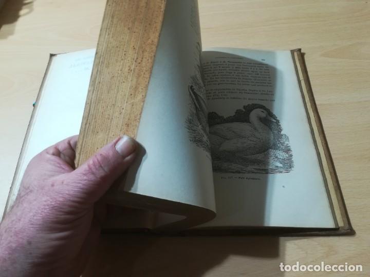Libros antiguos: ZOOTECNIA - TRATADO DE GANADERIA E INDUSTRIAS RURALES / PEDRO MOYANO / 1907 IMPRENTA HOSPICIO ZARAGO - Foto 8 - 226130925