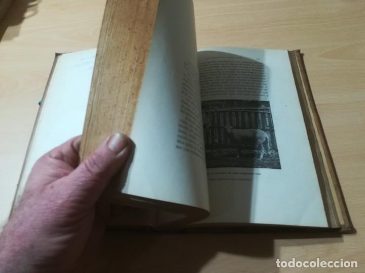 Libros antiguos: ZOOTECNIA - TRATADO DE GANADERIA E INDUSTRIAS RURALES / PEDRO MOYANO / 1907 IMPRENTA HOSPICIO ZARAGO - Foto 11 - 226130925