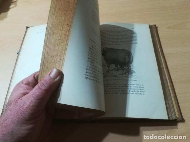 Libros antiguos: ZOOTECNIA - TRATADO DE GANADERIA E INDUSTRIAS RURALES / PEDRO MOYANO / 1907 IMPRENTA HOSPICIO ZARAGO - Foto 13 - 226130925