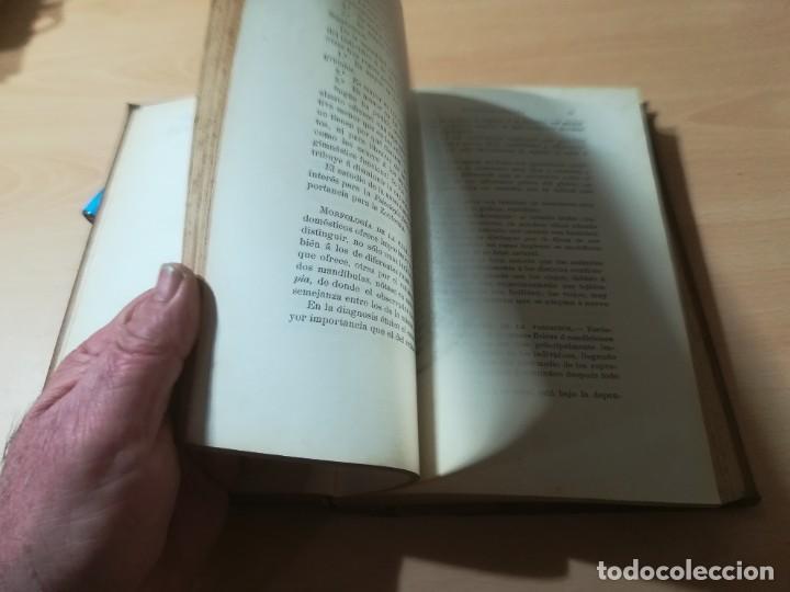 Libros antiguos: ZOOTECNIA - TRATADO DE GANADERIA E INDUSTRIAS RURALES / PEDRO MOYANO / 1907 IMPRENTA HOSPICIO ZARAGO - Foto 17 - 226130925