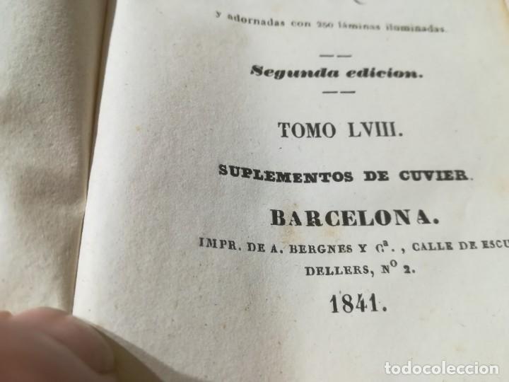 Libros antiguos: OBRAS COMPLETAS DE BUFFON / LVIII HISTORIA DE LOS CUADRUPEDOS / 1841 BERGNES Y Cª BARCELONA / AB105 - Foto 6 - 226614980