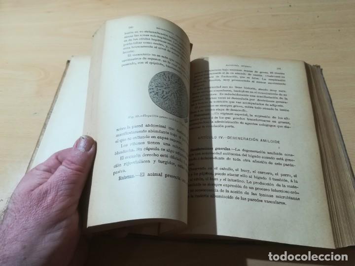 Libros antiguos: ENCICLOPEDIA VETERINARIA CADEAC / TOMO III PATOLOGIA INTERNA / PANCREAS HIGADO PERITORENO FOSAS NASA - Foto 14 - 227038350