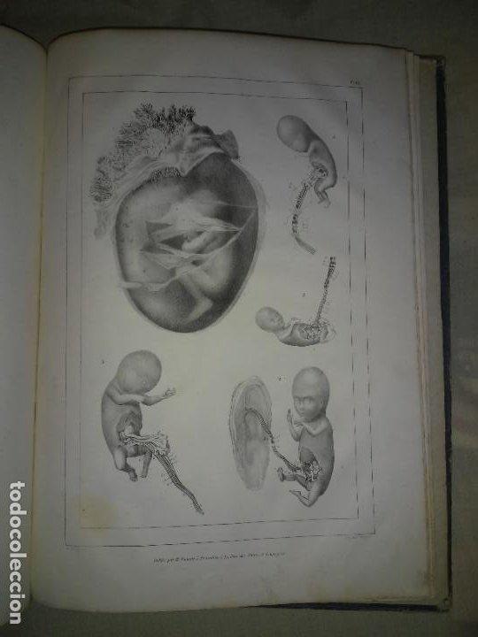 Libros antiguos: EMBRIOLOGIA O OVOLOGIA HUMANA - AÑO 1834 - VELPEAU - BELLAS PLANCHAS EN FOLIO. - Foto 10 - 229213030