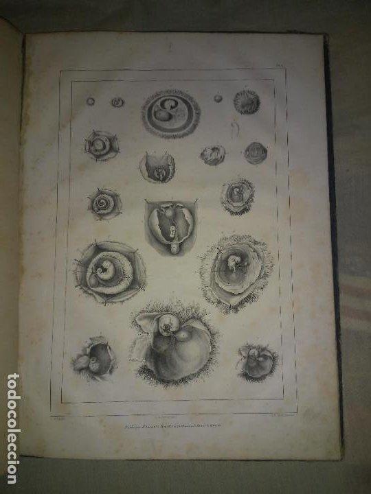 Libros antiguos: EMBRIOLOGIA O OVOLOGIA HUMANA - AÑO 1834 - VELPEAU - BELLAS PLANCHAS EN FOLIO. - Foto 11 - 229213030