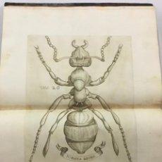 Libros antiguos: ESPERIENZE INTORNO ALLA GENERAZIONE DEGL'INSETTI. REDI, FRANCESCO. 1668. CON GRABADOS.. Lote 231445825