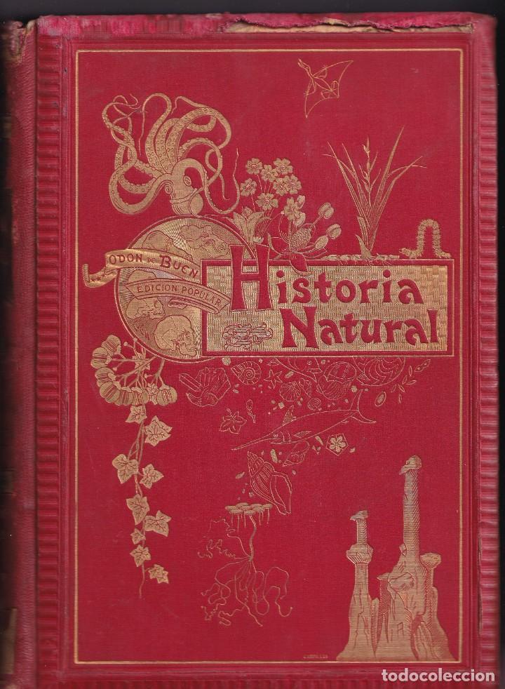 Libros antiguos: HISTORIA NATURAL POR ODON DE BUEN -2 TOMOS PIEL Y ORO CON GRABADOS - BARCELONA - MANUEL SOLER 1897 - Foto 2 - 234036715