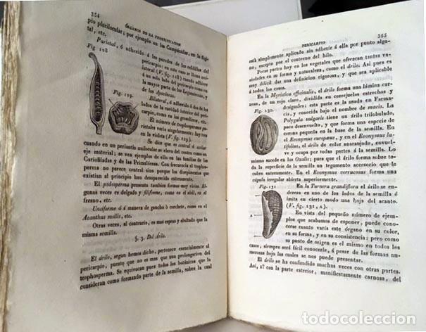 Libros antiguos: Nuevos Elementos de Botánica y de Fisiologia Vegetal. (1839) Richard. 164 figuras - Foto 2 - 236066915