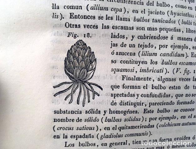 Libros antiguos: Nuevos Elementos de Botánica y de Fisiologia Vegetal. (1839) Richard. 164 figuras - Foto 3 - 236066915