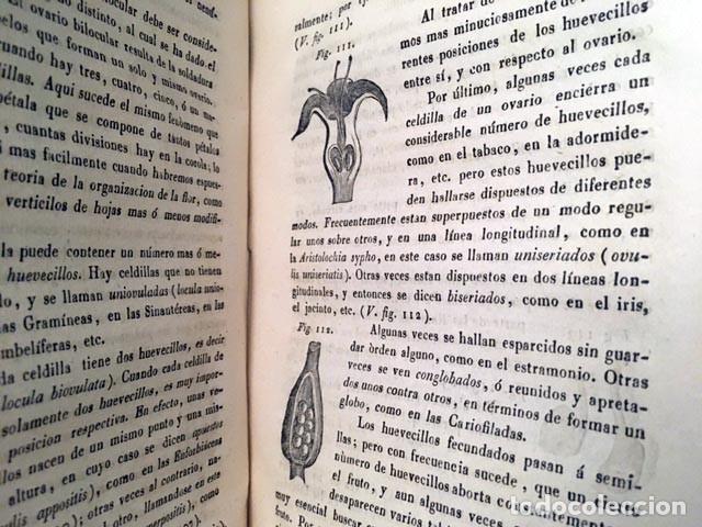 Libros antiguos: Nuevos Elementos de Botánica y de Fisiologia Vegetal. (1839) Richard. 164 figuras - Foto 4 - 236066915