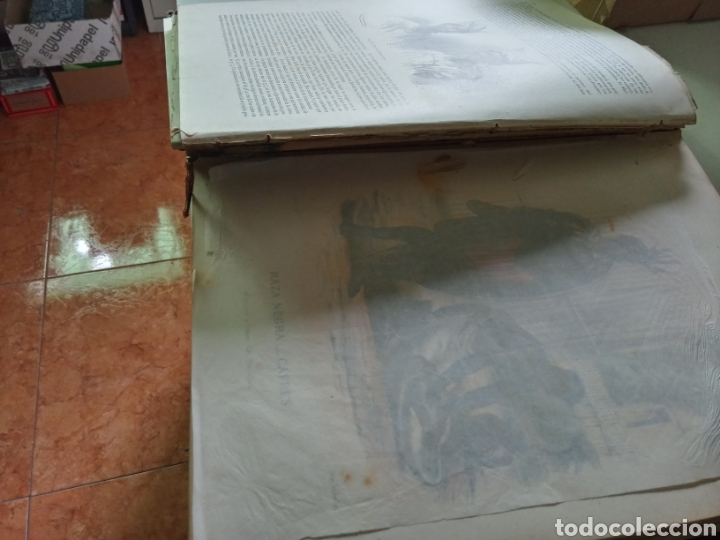 Libros antiguos: La Creacion Historia Natural 1880. Dr. A. E. Brehm. 7 volumenes . - Foto 8 - 240660865